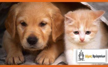 Βριλήσσια: Κάθε ημέρα είναι ημέρα προσφοράς και βοήθειας για τα αδέσποτα ζώα