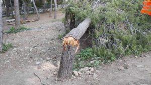 ΣΠΑΥ : Στον λόφο του Προφήτη Ηλία στην Ηλιούπολη τα συνεργεία καθάρισαν τα σπασμένα κλαριά και πεσμένα δέντρα της κακοκαιρίας «Μήδεια»