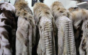 Ισραήλ: Η πρώτη χώρα παγκοσμίως που απαγορεύει το εμπόριο γούνας ζώων για την μόδα
