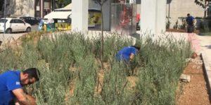 Βριλήσσια : Συνεχίζονται οι φυτεύσεις καλλωπιστικών και αρωματικών φυτών σε σημεια της πόλης