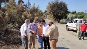 Διόνυσος: Αναδάσωση στις καμένες εκτάσεις εξήγγειλε ο Υπουργός Περιβάλλοντος