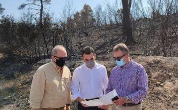 Το «πράσινο φως» για αναδάσωση των καμένων εκτάσεων σε Σταμάτα, Ροδόπολη και Διόνυσο, μετά την πρόσφατη πυρκαγιά που έκαψε πάνω από 600 στρέμματα, έδωσε ο Υπουργός Περιβάλλοντος Κώστας Σκρέκας,