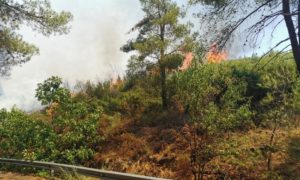 Διόνυσος: Σε ύφεση βρίσκεται η μεγάλη φωτιά σε Σταμάτα και Ροδόπολη