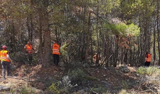 Διόνυσος: Με σχεδιασμό και πρόγραμμα ο Δήμος συνεχίζει να καθαρίζει και να προστατεύει το βουνό