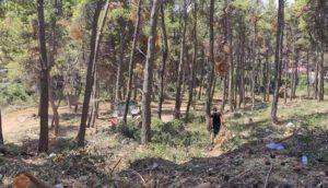 καθαρισμού βλάστησης απομάκρυνσης πεσμένων κορμών και κλαδιών