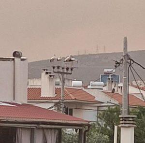 ΑΝΙΜΑ : Δεκάδες νεκρά κατά την διάρκεια της φωτιάς στην Βαριμπόμπη όλα από πρόσκρουση σε ηλεκτροφόρα καλώδια