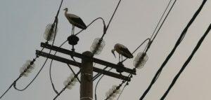 ΑΝΙΜΑ : Δεκάδες νεκρά πουλιά  κατά την διάρκεια της φωτιάς στην Βαριμπόμπη όλα από πρόσκρουση σε ηλεκτροφόρα καλώδια