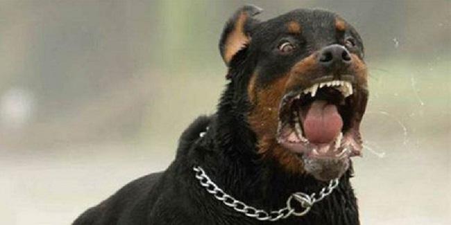 Ιταλία: 20χρονη γυναίκα έχασε τη ζωή της όταν την κατασπάραξε μια αγέλη από αδέσποτα σκυλιά