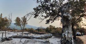 Χαλάνδρι: Από τη Βόρεια Εύβοια στους πυρόπληκτους της Γορτυνίας