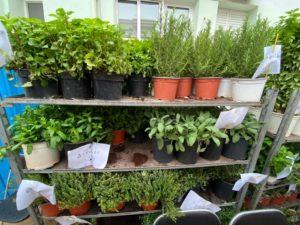 Παπάγου Χολαργός: Ο «Αστικός Κήπος -Biohabity» έφερε τους πρώτους καρπούς