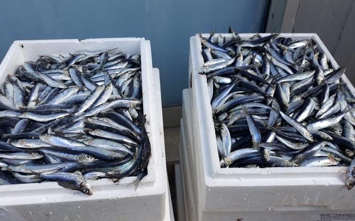 Πεύκη Λυκόβρυση: Φρέσκα ψάρια για τους δικαιούχους του Κοινωνικού Παντοπωλείου