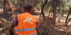 ΣΠΑΥ : Ενόψει των βροχοπτώσεων ο Σύνδεσμος απομάκρυνε ποσότητες κλαδιών στα σημεία επαφής του βουνού με τον αστικό ιστό σε Ηλιούπολη και Βύρωνα